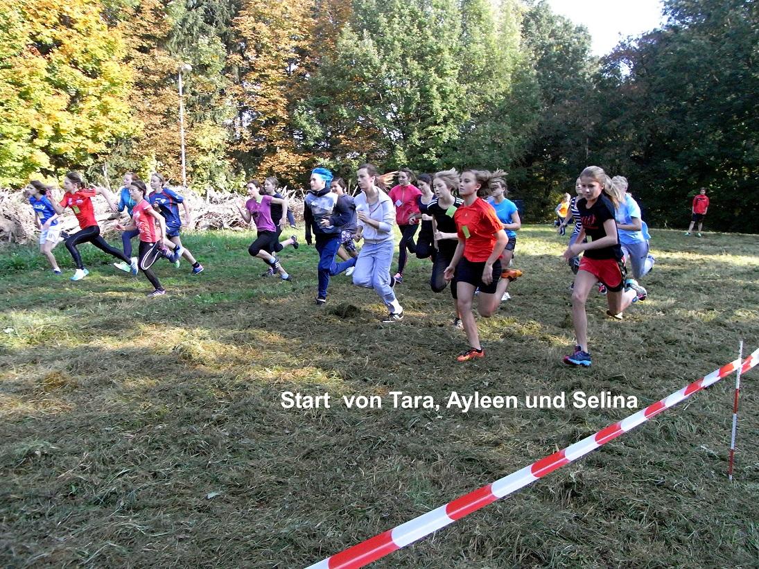 Sie sehen Bilder des Artikels: Kreiscrosslauf 2013