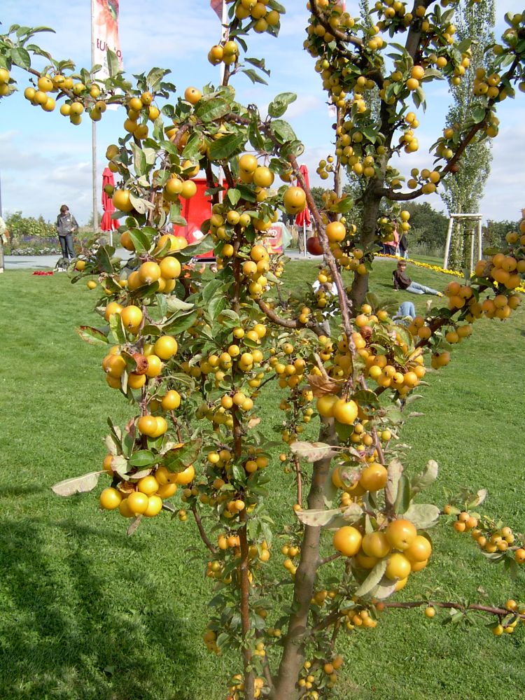 Sie sehen Bilder des Artikels: Die BuGa-Das Blumenparadies